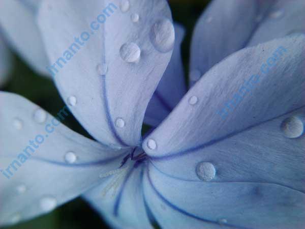 belajar fotografi dengan perangkat sederhana - pencahayaan mendung macro - irnanto.com
