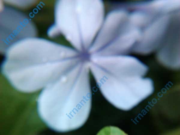 belajar fotografi dengan perangkat sederhana - pencahayaan mendung tanpa fokus - irnanto.com
