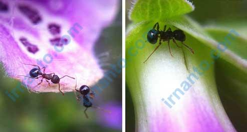 Jual VEENTOOK OSINO 0.67x Wide Angle + Micro Lens Kit camera hasil foto macro lens irnanto.com